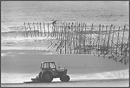A salmon netter from Joseph Johnston & Sons of Montrose, recovering fish from a fly net (a type of stake net) on the sands at St. Cyrus, Aberdeenshire. Fishing with fly nets here was discontinued after the 1998 season.<br /> Ref. Catching the Tide 60/96/01 (13th August 1996)<br /> <br /> The once-thriving Scottish salmon netting industry fell into decline in the 1970s and 1980s when the numbers of fish caught reduced due to environmental and economic reasons. In 2016, a three-year ban was imposed by the Scottish Government on the advice of scientists to try to boost dwindling stocks which anglers and conservationists blamed on netsmen.