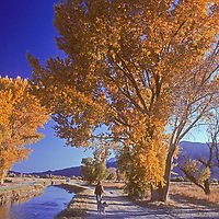 A woman and her dog walk between  a canal and fall-colored cottonwood trees in California's Owens Valley, near Bishop.  Behind are the Sierra Nevada mountains.