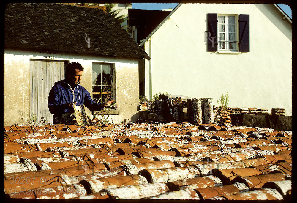 Bernard Audic & abandoned tiles used to collect flat oysters on Crach River before epidemics. France