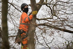 Wendover, UK. 28th April, 2021. An ecologist working on behalf of HS2 Ltd examines a tree expected to be felled for the HS2 high-speed rail link in ancient woodland at Jones Hill Wood in the Chilterns AONB. Felling of Jones Hill Wood, which contains resting places and/or breeding sites for pipistrelle, barbastelle, noctule, brown long-eared and natterer's bats, has recommenced after a High Court judge yesterday refused campaigner Mark Keir permission to apply for judicial review and lifted an injunction on felling.