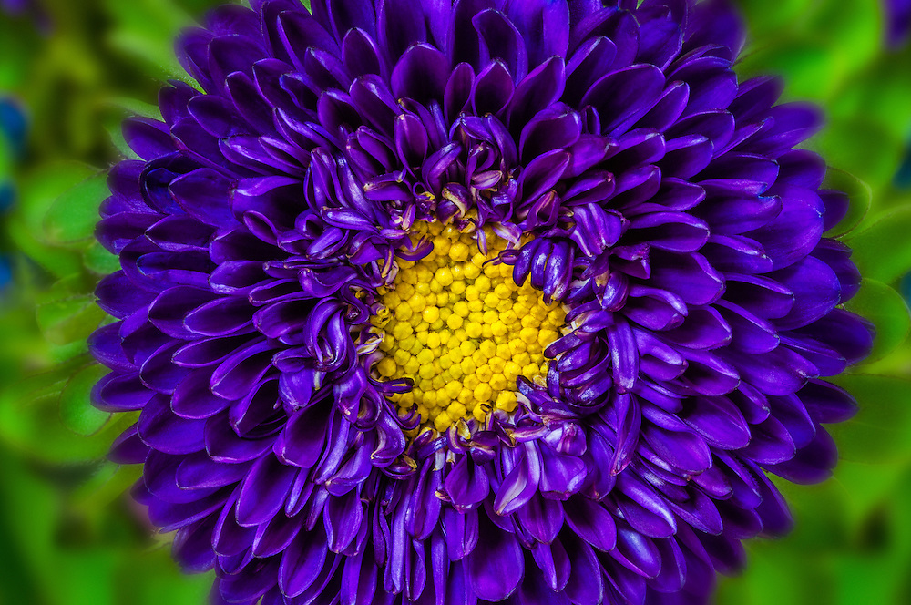 Close up of a purple flower centered with green background.