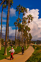 The bike path lined with palm trees between Cabrillo Boulevard and East Beach; Santa Barbara, California USA.
