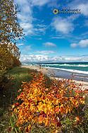 Autumn Maple along Lake Superior at Pictured Rocks National Lakeshore, Michigan, USA