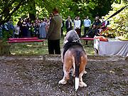 Dog attending a wedding ceremony in Czech Republic.