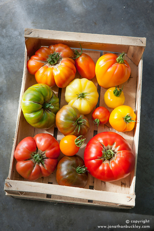 Heirloom tomatoes in a wooden box at Worton Organic Farm Shop. Tomato 'Gold Medal', 'Orange Banana', 'Black Sea Man', 'Stupice', 'Orange Russian', 'Believe It or Not', 'Wapsipinicon', 'White Queen', 'Aunt Ruby's German Green', 'Nyagous', 'Caro Rich', 'Brandywine', 'Sudduth's Strain', 'Jaune Flamme'