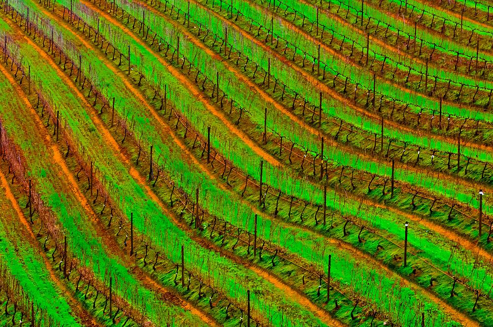 Vineyards, Tokara Winery, Helshoogte Pass, near Stellenbosch (Cape Town area), South Africa