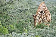 Kenya:  Walking with Wildlife
