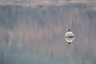 A distant buoy on Kielder Reservoir. (400mm lens at f/8 handheld in poor light at the end of a grey winter's day. 1/90s, ISO3200).