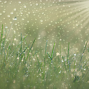 """Rain Dance"" <br />
