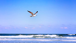 A seagull flies over the ocean framed by blue skies