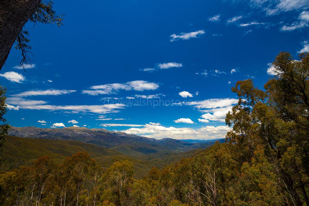 Forest in Kosciuszko National Park, Australia
