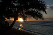 Palm trees silhouetted against the setting sun on Oahu's north shore, Hawaii