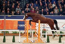 114, Kardinaal HX<br /> KWPN Stallionshow - 's Hertogenbosch 2018<br /> © Hippo Foto - Dirk Caremans<br /> 01/02/2018