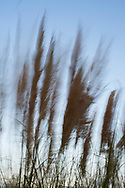 La sombra del viento