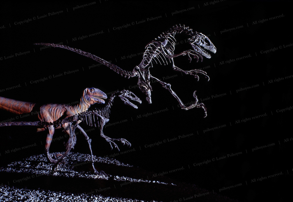 """Professor John Ostrom of Yale University discovered Deinonychus, a pack-hunting dinosaur that terrorized victims during the Cretaceous with sicklelike claws on its feet.  Deinonychus means """"terrible claw."""""""