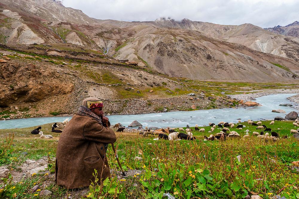 Shepherd and his herd of sheep and goats, Leh-Manali Highway, Himachal Pradesh, India.