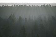 Forest in snowless winter with bright sunshine forming rays of light through  late morning haze, Ķemeri National Park, Latvia Ⓒ Davis Ulands   davisulands.com