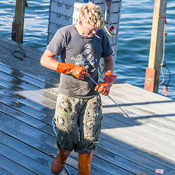 Wharf employee Carl Pottle moving bins of lobsters at Great Wass Lobster in Beals, Maine.