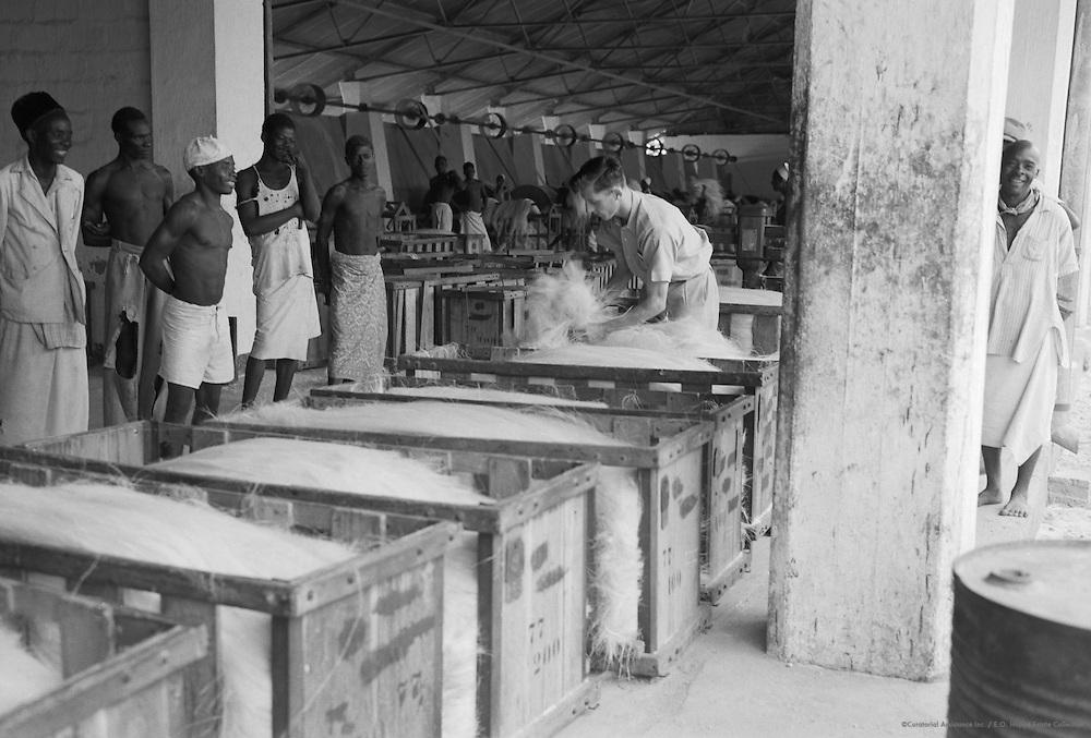 Processing Sisal Stalks, Tanga, Tanganyika (now Tanzania), Africa, 1937