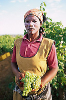 ca. March 1999, South Africa --- Vineyard Worker with Grape Bunch --- Image by © Owen Franken/CORBIS
