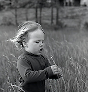 Toddler in field with flower.