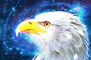 Digitally enhanced close up image of the head and bill of a Bald Eagle (Haliaeetus leucocephalus) a North American bird of prey