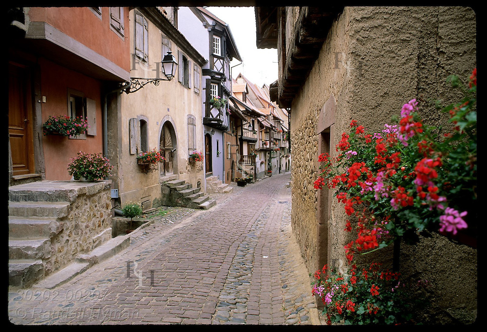 Spray of geraniums frames view of cobblestone street lined with old homes in Eguisheim, Alsace. France