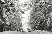 Snow day on the trail.  ©2014 Karen Bobotas Photographer