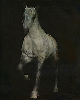 Horses are graceful and are also called noble animals. This painting of an Arabian horse doing a dressage exercise will certainly add value to any interior. Horses are unmissable in a rural environment. Not only in a country house will this painting of a horse come into its own. Also in a city environment horses can add just that little bit more to your interior. –<br /> -<br /> BUY THIS PRINT AT<br /> <br /> FINE ART AMERICA / PIXELS<br /> ENGLISH<br /> https://janke.pixels.com/featured/1-horses-white-horse-doing-dressage-exercise-jan-keteleer.html<br /> <br /> <br /> WADM / OH MY PRINTS<br /> DUTCH / FRENCH / GERMAN<br /> https://www.werkaandemuur.nl/nl/shopwerk/paard-dat-uit-de-duisternis-komt/770284/132?mediumId=1&size=55x70<br /> –<br /> -