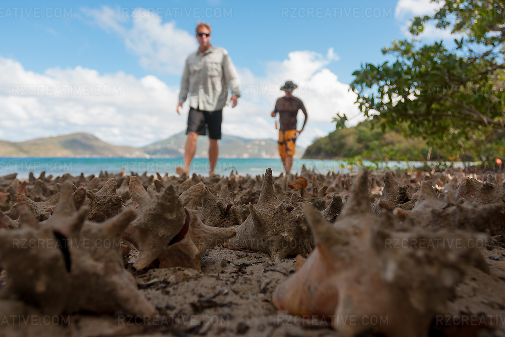 Mark Anders (left) and Ted Rutherford (right) discover dozens of conch shells lined up on a remote beach near Annaberg Point on the island of St. John, USVI. Photo © Robert Zaleski / rzcreative.com<br /> —<br /> To license this image for editorial or commercial use, please contact Robert@rzcreative.com