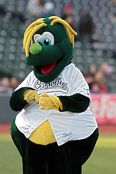 16 May 2014:  CornBelters Mascot Corny during a Frontier League Baseball game between the Evansville Otters and the Normal CornBelters at Corn Crib Stadium on the campus of Heartland Community College in Normal Illinois
