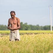 CAPTION: Rice farmer and DESI Power customer Hirdu Manda checks the progress of his paddy. LOCATION: Beherbari, Araria District, Bihar, India. INDIVIDUAL(S) PHOTOGRAPHED: Hirdu Mandal.