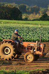 Plantacao de hortalica / Vegetable plantation..Vale Real, Rio Grande do Sul, Brazil