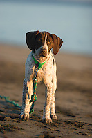 Portrait of Luna waiting on beach along the Columbia River, OR.