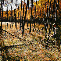 A bowhunters makes hiw way through an healthy aspen riverbottom