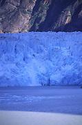 Sawyer Glacier, Tracey Arm, S.E. Alaska<br />
