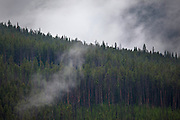 Trees shrouded in low cloud and fog at Dunraven Pass, Yellowstone National Park, Wyoming.