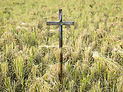 A wooden cross standing in a paddy rice field in the ethnic Kayan village of Lo Pu, Kayah State, Myanmar on 16th November 2016. In Catholic villages farmers erect wooden crosses two or three weeks before harvest to pray for more grains