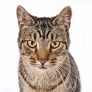 2013 Cat Face