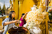 07 JUNE 2014 - YANGON, YANGON REGION, MYANMAR: A woman makes merit and prays at an alter for people born on Tuesdays at Shwedagon Pagoda. People pray at alters and chapels dedicated to the day of the week they were born on in Theravada Buddhism. Shwedagon Pagoda is officially called Shwedagon Zedi Daw and is also known as the Great Dagon Pagoda and the Golden Pagoda. It's a 99 metres (325 ft) gilded pagoda and stupa located in Yangon. It is the most sacred Buddhist pagoda in Myanmar with relics of the past four Buddhas enshrined within: the staff of Kakusandha, the water filter of Koṇāgamana, a piece of the robe of Kassapa and eight strands of hair from Gautama, the historical Buddha.   PHOTO BY JACK KURTZ