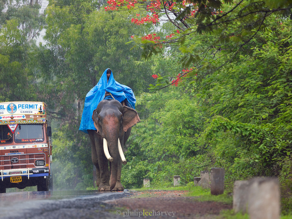 A mahout, an elephant driver, shelters under a plastic sheet during monsoon rains, Goa, India