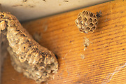 Wasp's nest Photographed in Israel