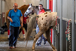 "Jaume Punti Dachs, (""Juma""), world Endurance champion   <br /> Departure horses from Liege Airport<br /> FEI World Equestrian Games™ Tryon 2018<br /> © Hippo Foto - Dirk Caremans<br /> 01/09/2018"