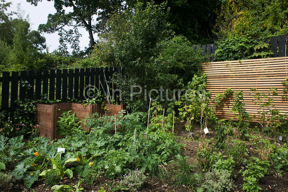 Parts of the Energy Garden at Brondesbury Park Station with courgettes, herbs and fruits 28th July 2016, London, United Kingdom. The water is collected rain water and the pump is solar panel powered. Energy Gardens is a pan-London community garden project where reclaimed land alongside over ground train stations and track are cultivated by local community groups. Up 50 gardens are projected with the rail network being the connection grid. The project is a collaboration between Repowering London, Groundwork, local community groups, station managers working for Transport For London and Network Rail.