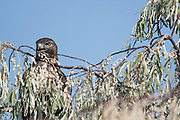 Wildlife photography from Brigham City UT USA