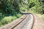 Curved railway line going around a corner through luxuriant forest vegetation, Mirissa, Sri Lanka, Asia
