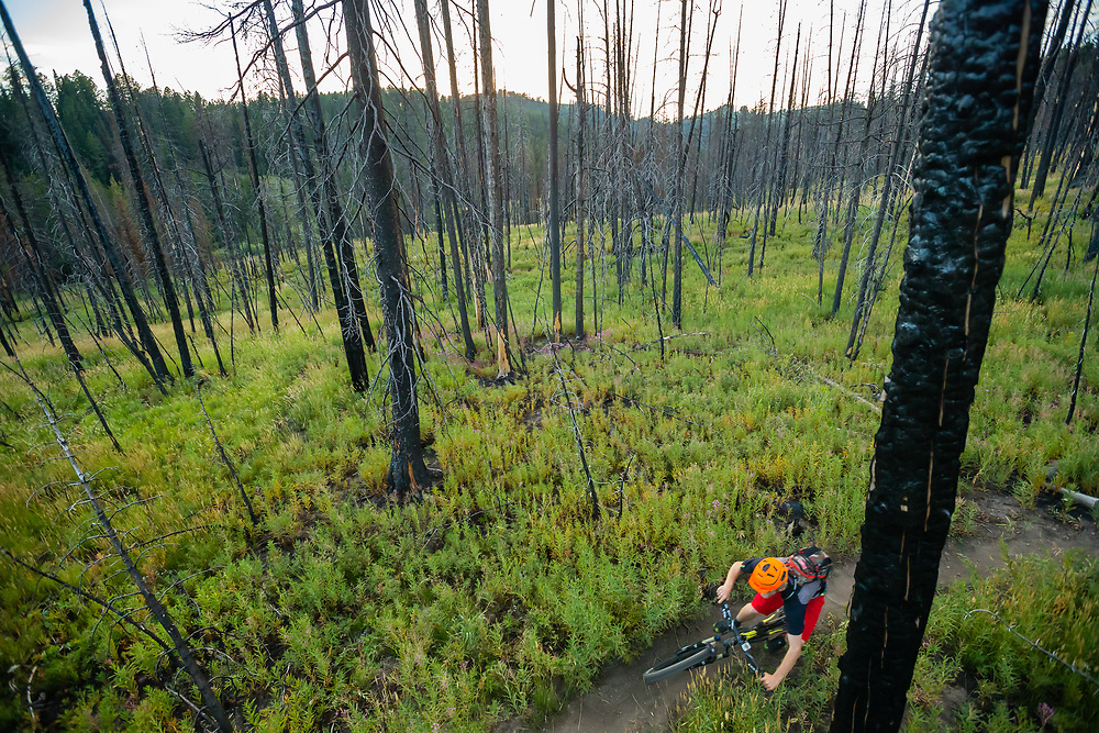 Andrew Whiteford rides through the wildfire burn and fireweed along the Wilson Canyon Trail at sunset.