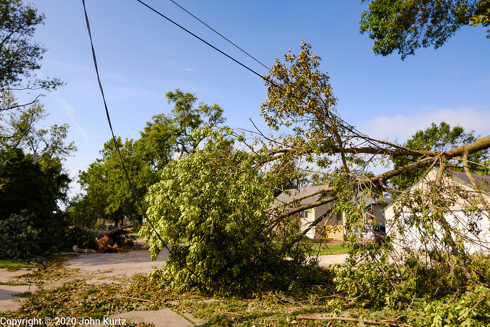"""12 AUGUST 2020 - SLATER, IOWA: Trees across Benton Street in Slater Wednesday. The trees were blown over during the storm Monday. According to Iowa Governor Kim Reynolds, the storm damaged 10 million acres of corn and soybeans in Iowa, about 1 one-third of Iowa's 32 million acres of agricultural land. Justin Glisan, Iowa's state meteorologist, said the storm Monday, Aug. 10, lasted 14 hours and traveled 770 miles through the Midwest before losing strength in Ohio. The storm was a seldom seen """"derecho"""" that packed straight line winds of nearly 100MPH. The storm pummelled Midwestern states from Nebraska to Ohio.     PHOTO BY JACK KURTZ"""