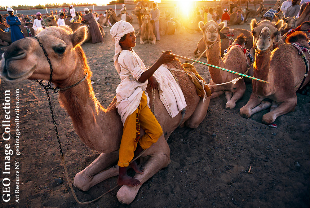 Pakistani boy with several camels at the camel races in Al Dhaid in the emirate of Sharjah.  Before the introduction of robotic camel jockeys in 2001, Pakistani boys ages six to ten are brought from Pakistan during the winter season to race in United Arab Emirates.