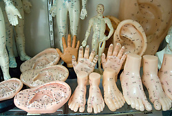 Plastic body parts for learning acupuncture on display in traditional Chinese medicine shop in Beijing